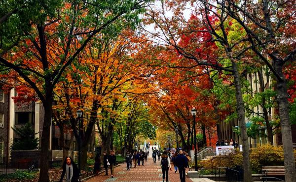 Image of fall trees on Penn's Locust Walk